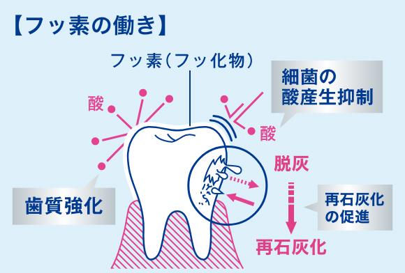 歯磨き粉の正しい使い方
